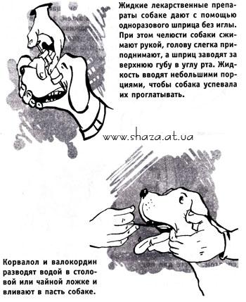 аллергия на творог у собаки